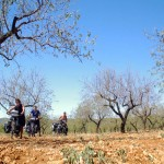 Solidream dans les oliviers