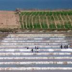 Entre Casablanca et Safi nous longeons des terres travaillées par la main de l'Homme.
