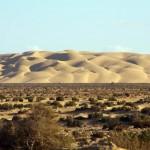 Tan Tan Plage + 60km. Cet été 2010 a accueilli les plus grosses pluies de ces 30 dernières années. Ainsi nous avons la chance de voir du vert dans le désert... Incroyable !!!