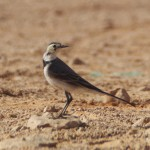 Il y a beaucoup plus d'animaux dans le désert que ce que l'on croit.
