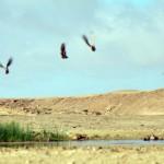 Les rares points d'eau que nous trouvons attirent la faune et nous permettent de réaliser quelques belles images.