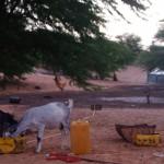 Entre 5h et 8h du matin, à 100km du Sénégal, nous nous arrêtons pour dormir aux abords d'un village maure. Réveillés par les chèvres, nous repartons sur la route...
