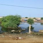 D'après les anciens il n'avait pas autant plu en Mauritanie depuis 40ans...