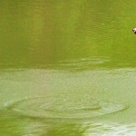 Partie de pêche acrobatique.