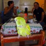 Joinville. Eduardo a sauvé un perroquet il y a quelques années, il fait désormais partie de la famille et se déplace en toute liberté dans la maison!