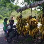Ici, encore plus qu'ailleurs, nous nous régalons de bananes à petits prix et grande valeur énergétique.