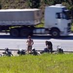 Le passage incessant des camions nous donne parfois un peu mal à la tête. En effet, nous sommes surpris de constater que sur les grands axes brésiliens il y a environ 5 camions pour une voiture.