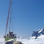 Ces phoques Crabier profitent de la chaleur du soleil pour digérer tranquillement sur ces morceaux de glace à la dérive.