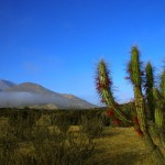 A quelques centaines de km au nord de Valparaiso nous rencontrons les premiers cactus, signe que le désert approche...