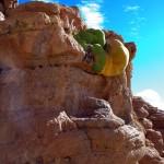 Yareta ou Llareta. Cette plante est très compacte pour réduire la perte de chaleur et elle est souvent utilisé comme combustible par les autochtones en plus de ses vertus thérapeutiques contre la fièvre, l'asthme, les bronchites... Sa pousse est très lente avec une très grande longévité. Certains spécimens sont âgés de 3.000 ans.