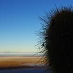 Le monde entier est un cactus Il est impossible de s'assoir Dans la vie, il y a qu'des cactus Moi je me pique de le savoir Aïe aïe aïe, ouille, aïe aïe aïe (Jacques Dutronc)