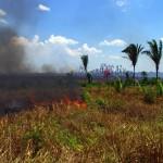L'Amazonie qui part en fumée. Une vision bien trop rencontrée lors de notre traversée… Ce sont des feus volontaires pour la plupart, qui servent bien souvent à « faire de l'espace » sur les terrains des propriétaires qui souhaitent y mettre des pâturages … Des colonnes de fumées de parfois quelques centaines de mètres empoisonnent l'air des villages environnants. Nous pouvons les repérer des kilomètres à l'avance.