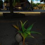 Vue du village d'indiens Tenharin : maisonnette de paille sur pilotis (qu'ils nous ont prêté) sur fond de palmiers. Si si, nous sommes bien dans le fin fond de l'Amazonie !