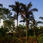 Cabane de fermier dans un environnement verdoyant. C'est le type d'endroits que nous cherchons à investir pour dormir le soir. Elles sont habitées par des fermiers de toutes origines, à l'image du Brésil, une « terre pour tous » où règne la culture de l'indifférence raciale. Un exemple !