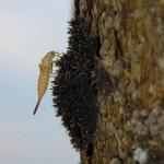 Un des milliards d'insectes qui peuplent l'Amazonie. Qui connaît le nom de celui-ci ?