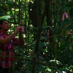 Nous partons avec Patrick, accompagné de Bruno, pour installer des sondes au cœur de la jungle. A 5, 25, 50cm et 1m nous enterrons de nombreux tubes avec embouts en céramique. Sur une surface de 30m par 5m, délimitée par ces fanions rose que Bruno fixe avec minutie, nous éparpillons de l'azote en poudre. Pendant plusieurs années ces installations vont permettre d'analyser les effets de l'azote sur l'environnement…