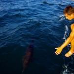 Nos amis les dauphins à portée de main, ils viennent jouer à l'avant du bateau par bancs de 6 ou 7. Nous n'avons qu'une envie, nager à leur côté. Nous nous sommes jetés à l'eau lorsque le vent s'est calmé mais les dauphins n'étaient plus de la partie...
