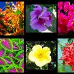 A cette saison, l'Amérique centrale foisonne de fleurs en tous genres le long des routes, pour notre plus grand plaisir de baroudeur. Avis aux experts pour nous éclairer sur les noms de ces belles plantes !