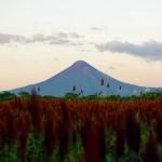 Nicaragua, champs de céréales sur fond de volcans, ceci est notre régime quotidien le long de la route panaméricaine.