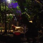 Accueillis dans une communauté au Nicaragua, nous nous faisons offrir le moment salvateur de la journée : la douche dans une atmosphère pour le moins champêtre