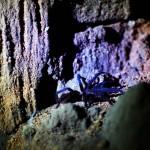 Honduras. De petits animaux pas forcément sympathiques peuplent nos nuits, d'où l'utilité du hamac dans cette région !
