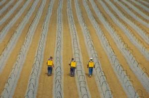 Agriculteurs mexicains