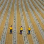 Vision sur les travailleurs dans les champs, c'est notre quotidien le long de la côte mexicaine. Maïs, poivrons, piments, bananiers, cocotiers, cannes à sucre, tomates ou encore de blé.