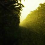Camouflés entre deux rangées de plants de maïs, les premiers rayons de soleil ne seront pas de refus car l'humidité ajoutée au froid nous fige au fond de nos duvets.