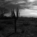 Des kilomètres et des kilomètres de néant. Seuls les cactus sont là pour agrémenter notre voyage entre deux zones habitées