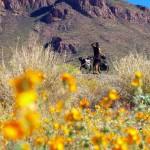L'Arizona n'est plus très loin, nous sommes sur-motivés pour les derniers kilomètres en montée jusqu'à la frontière à Nogales.