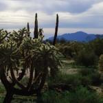 Une végétation qui était encore inconnue à nos yeux, sur de vastes étendues à perte de vue. Sacré contraste inattendu entre forêts de cactus et montagnes enneigées au loin.