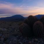 Dans ce climat aride et hostile qu'est Death Valley, il semblerait que seuls les cactus arrivent à pousser et s'épanouir correctement.
