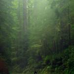 Etienne a beau être grand, il a tout de même l'air miniscule fasse à ces séquoias depassant parfois les 100 mètres de haut !