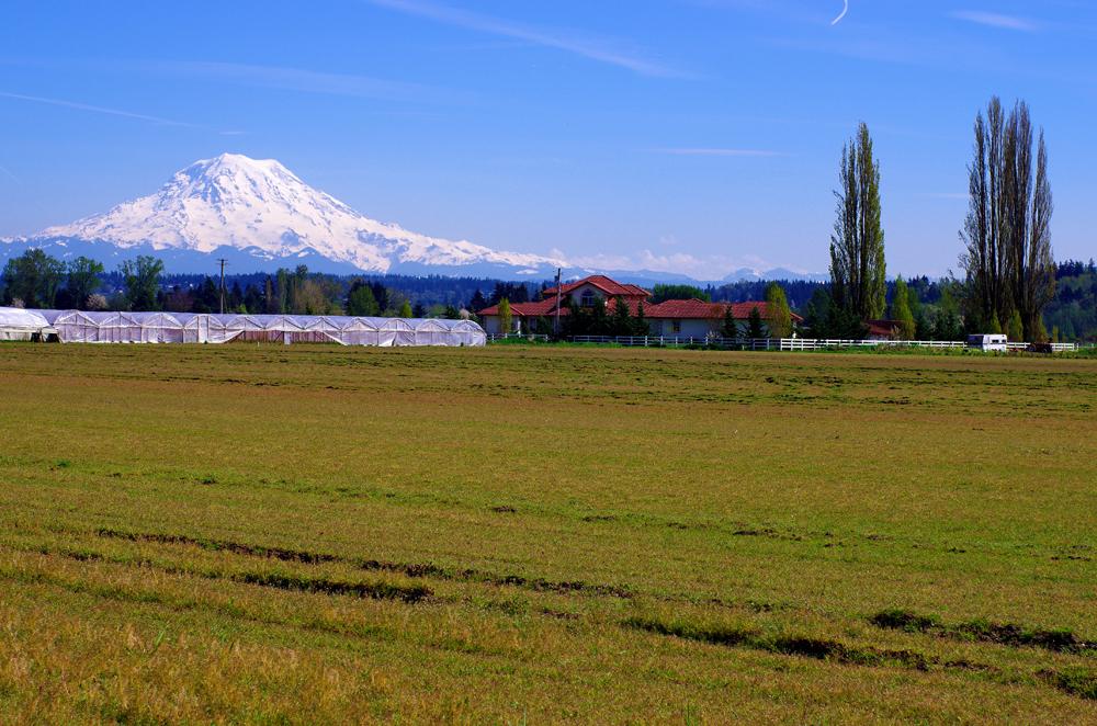 Le mont Rainier qui culmine à 4392m, est en fait un volcan qui reste un danger pour la population environnante, il est surveillé en permanence même si sa dernière activité connue remonte à plus d'un siècle. Il est un symbole de la région et reste dans notre panorama pendant deux jours sur notre route vers Seattle.