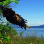 Le printemps est bel et bien arrivé. Les « caterpillars » (chenilles) sont de sortie.