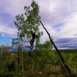 Les arbres se font de plus en plus petit sur notre route vers le nord mais nous faisons quand même l'effort de percher notre nourriture à l'abri des ours. C'est parfois un peu technique, surtout après une grosse journée de vélo !