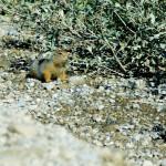 Les petits lemmings occupent les bords de la route et nous sommes étonnés de voir un animal à l'apparence si vulnérable capable de vivre dans cette région aux conditions climatiques extrêmes.