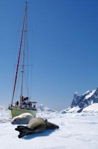 Les icebergs d'Antarctique