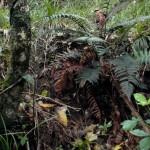 80 % de la flore est endémique aux deux îles qui composent le pays. C'est une découverte fascinante que de marcher dans ces forêts.