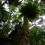 """Nous profitons de notre """"QG"""" pour aller vadrouiller dans la forêt primitive aux alentours. Brian explique : """"Explorer la forêt native, ça donne l'impression d'entrer dans un nouveau monde. Tous ces nouveaux arbres, plantes et oiseaux m'ont fasciné. D'entrée, j'ai été surpris par la nouveauté de cette île à part du reste du monde. L'ambiance sonore me donnait l'impression de revivre un peu l'Amazonie, les petites bêtes dangereuses en moins. Marcher dans la forêt primaire a été pour moi une des expérience les plus captivantes au pays des kiwis. J'ai vraiment ressenti la sensation de découverte qui fait un des intérêts de cette aventure autour du monde."""""""
