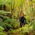 """Morgan : """"Les forêts de Nouvelle-Zélande sont très pauvres en mammifères, insectes et reptiles. Nous pouvons y voir l'avantage de pas craindre les serpents ni les jaguars mais ceci me frustrait un peu lors de nos randonnées. La végétation est belle, les oiseaux chantent mais le charme de la jungle disparaît un peu dans des conditions aussi sûres"""""""