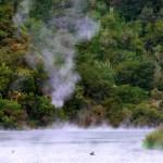 L'activité volcanique au centre de l'île du nord est importante. Ici, un étang complet vient d'une source chaude. Malheureusement les petites sources chaudes que nous localisons sont toutes payantes, ce ne sera pas pour nous...