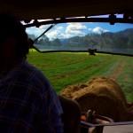 Alors que nous roulions près de Matamata, nous nous arrêtons pour manger un bout devant la ferme de Simon. Quelques minutes plus tard, il nous offre une glace à chacun, puis nous invite à camper là pour le soir-même. Le temps pour nous d'aller découvrir la vie dans sa ferme familiale qui produit du lait.