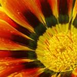 En Australie encore nous découvrons de nouvelles plantes et fleurs. Tout au long de la journée notre regard se pose sur ces éléments nouveaux. En changeant de continent, nous sommes assurés de redécouvrir la nature à chaque fois !