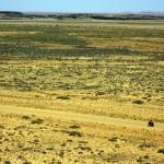 Brian seul dans le désert sur la fameuse Oodnadatta track. Avant que la route principale ne soit construite, ceci était l'axe majeur principal du centre de l'Australie. Nous parcourons le chemin qu'empruntaient les « sheerers », eux aussi à vélo, pour aller tondre les moutons de station en station, ces immenses fermes australiennes. Cette route était également empruntée pour le commerce entre aborigènes car elle dispose de plusieurs sources d'eau.