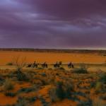 La lumière offerte par ce spectacle est incroyable. Malgré le temps menaçant, nous sommes conscients que nous vivons une étape mémorable de notre voyage. Avancer dans un décor aussi unique nous laisse bouche bée. Nous vivons l'expérience Outback à son summum.