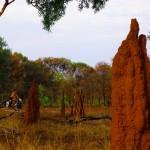 Nous entrons un peu plus dans ce climat tropical. Les termitières, par milliers et durant des centaines de kilomètres, se dressent le long de notre route. Ces chefs d'œuvre, tel des monuments, peuvent atteindre plusieurs mètres de haut.