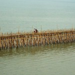 A Kampong Cham, chaque année les habitants construisent cet immense ouvrage d'art. Ce pont de bambou est l'unique lien avec l'île située en face, pour transporter les marchandises. Voitures et deux roues circulent aisément dessus !!! Il ne faut pas plus d'un mois pour construire cette merveille qui, lors de la prochaine saison des pluies sera emportée par les flots du Mékong.