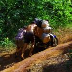L'unique moyen d'approvisionner les villages situés dans cet jungle est la mobylette. Brian et Etienne aident un peu ce convoi (exceptionnel pour nous) à monter la pente. Allez Hop c'est repartit.