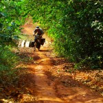 Lancé à vive allure sur les terres ocres de la Cardamone, nous franchissons ces ponts de bois étroits, avant d'attaquer des montées difficiles où ils faut parfois mettre pied à terre pour pousser les vélos.